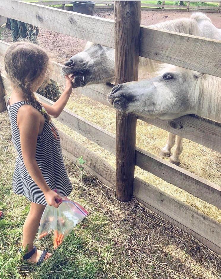 Emily Akradi - girl feeding horses