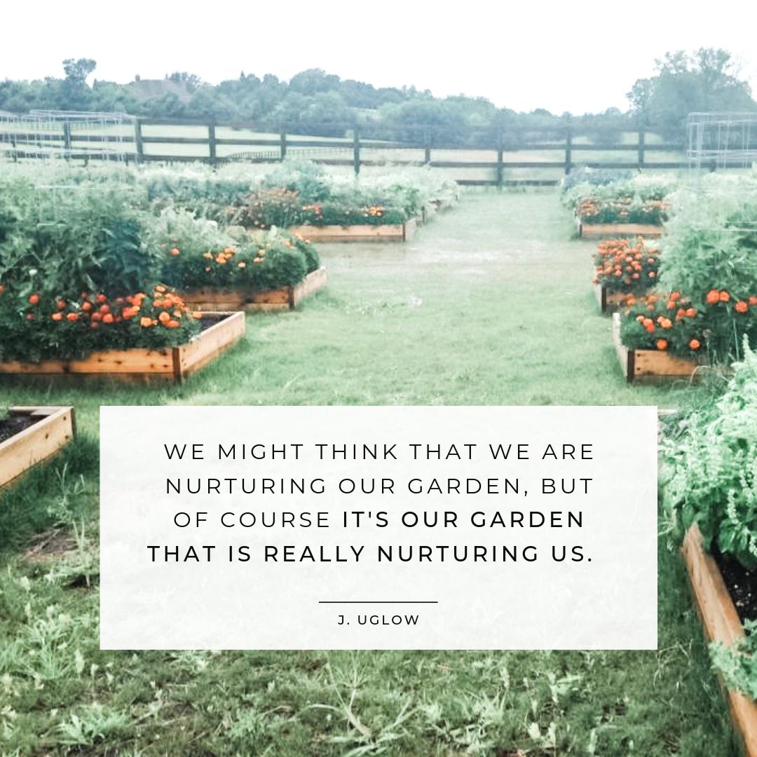 Emily Akradi's Vegetable Garden