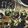 Gardening for Wellness